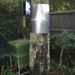 Aluminium banding around a tree close to a fence in Auckland