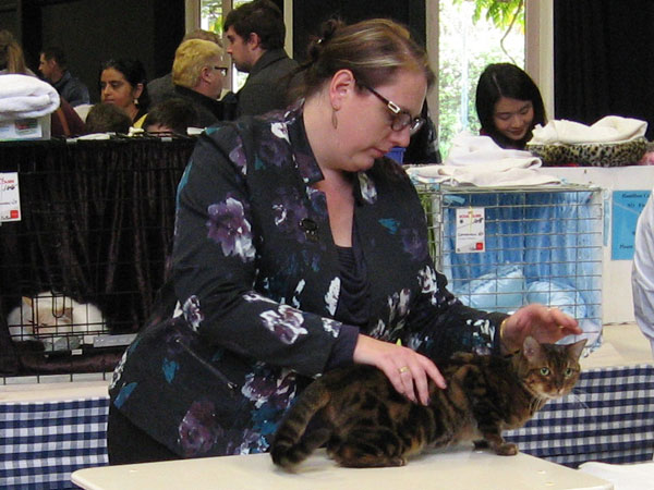 We're coming to the Hamilton Cat Show!