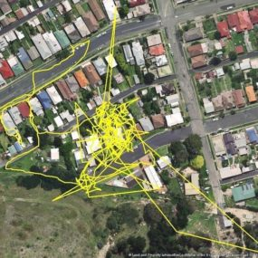 Australian cat tracking map