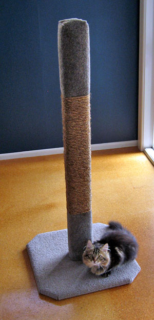 Cat Climbing And Scratching Posts Sturdy New Zealand Made
