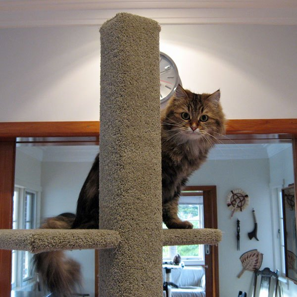 Cici tries out a Super Scratcher Deluxe Climbing Post