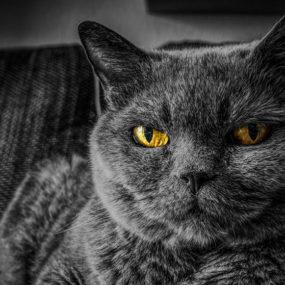 cat safe at home