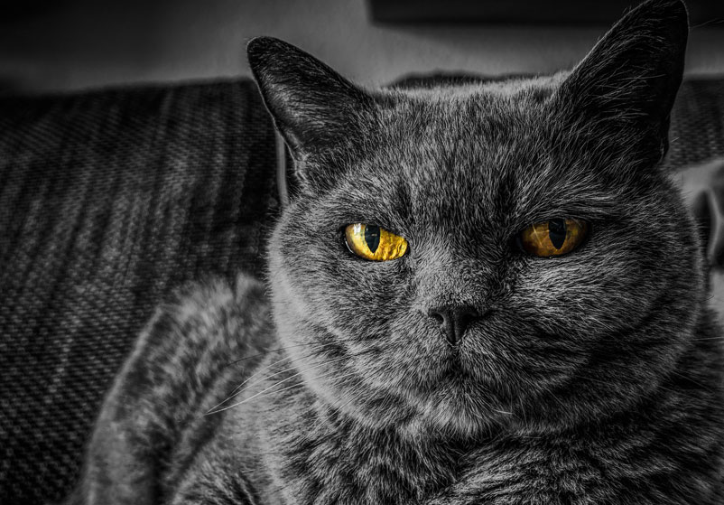 Quality of life for your cat – part 1