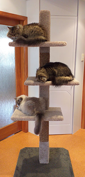 Mega 3 cat scratching post from catfence.nz