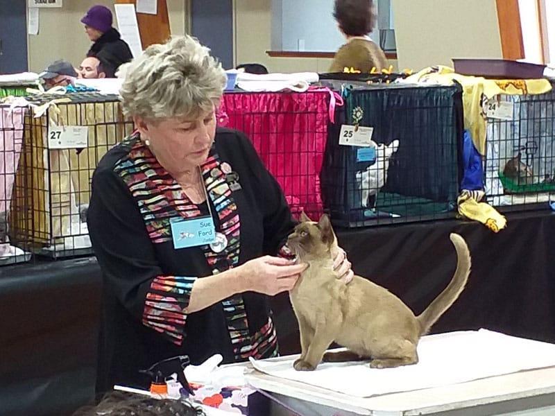TOSCA cat show, 23 June 2019