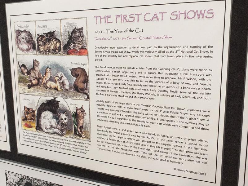 Hamilton Cat Club 2019 Show