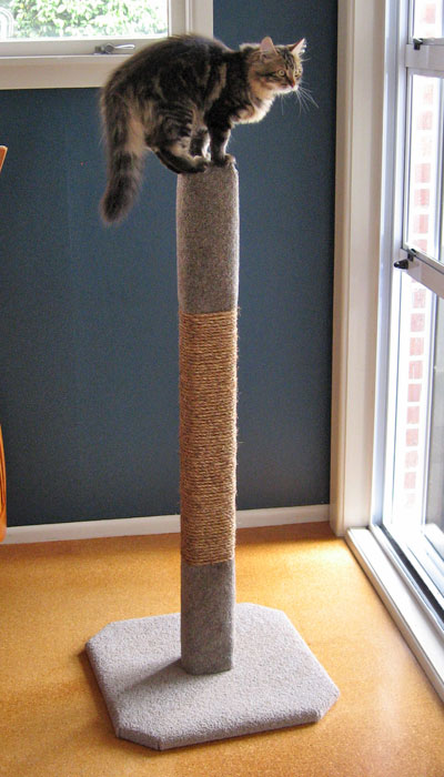 1.2m Basic cat climbing post
