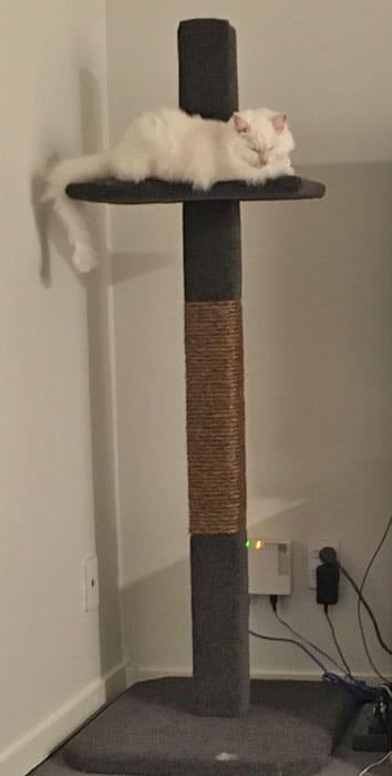 Compact cat climbing post