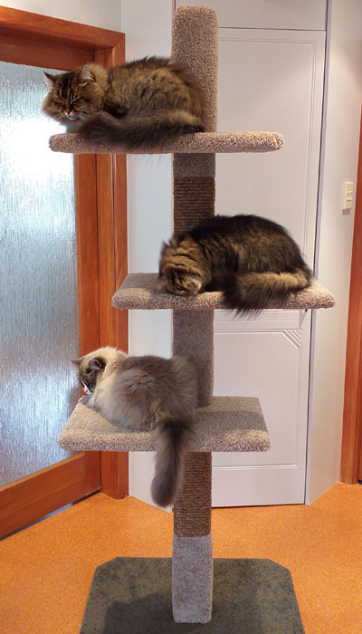 Mega-3 cat climbing post