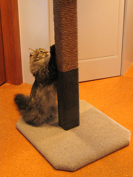 Cat scratching on climbing post