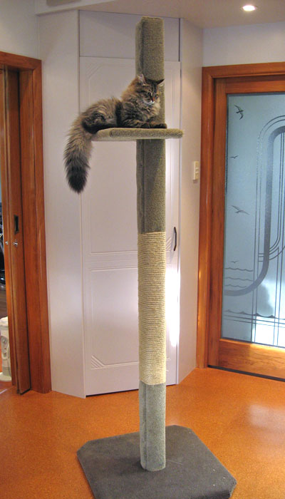 SUPER-1 cat climbing post