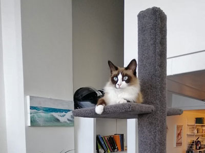 Cat on SUPER-1 climbing post