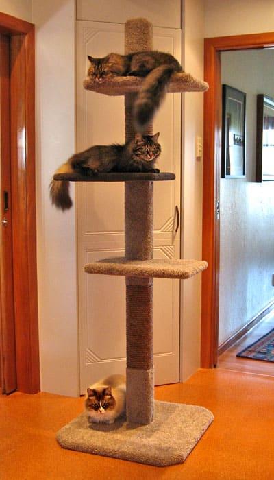 SUPER-3 cat climbing post