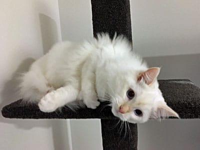 Cat on Compact climbing post
