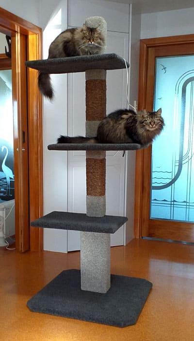 Maxi-3 Cat Climbing Post