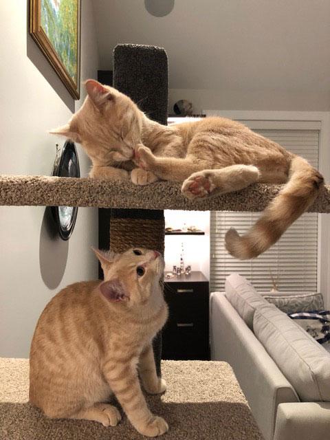 Cats on Mega-3 cat climbing post