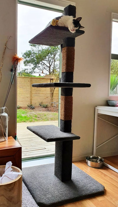 Cat on Maxi-3 cat climbing post