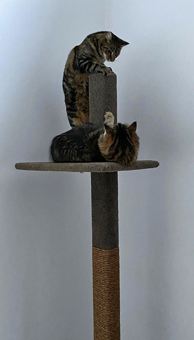 Cats on a Mega-1 cat climbing post