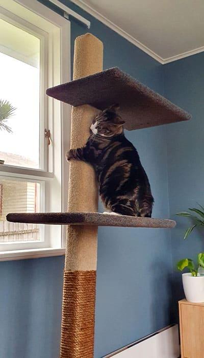 Cat on a Mega-2 cat climbing post