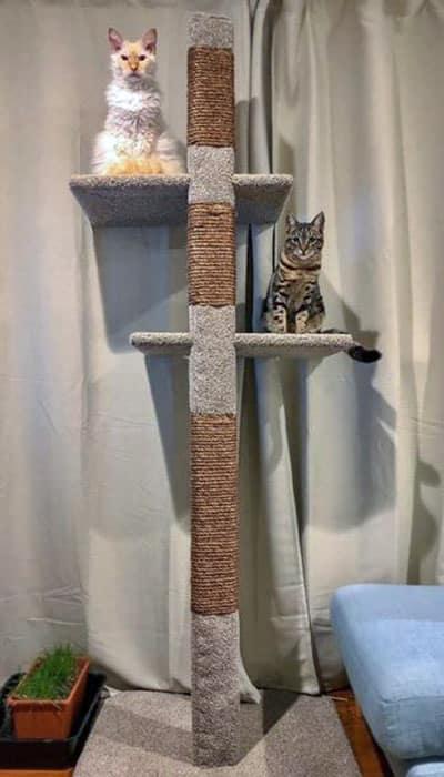 Cat on a Mega-2 cats climbing post