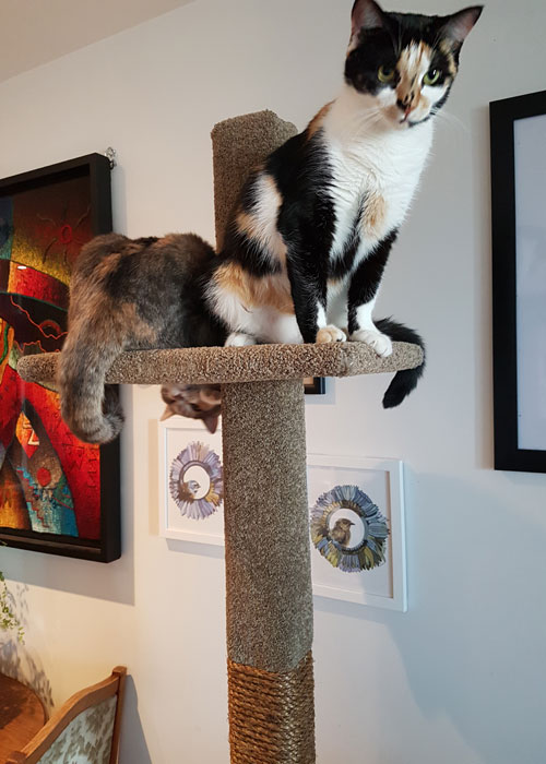 2 cats on SUPER-1 climbing post