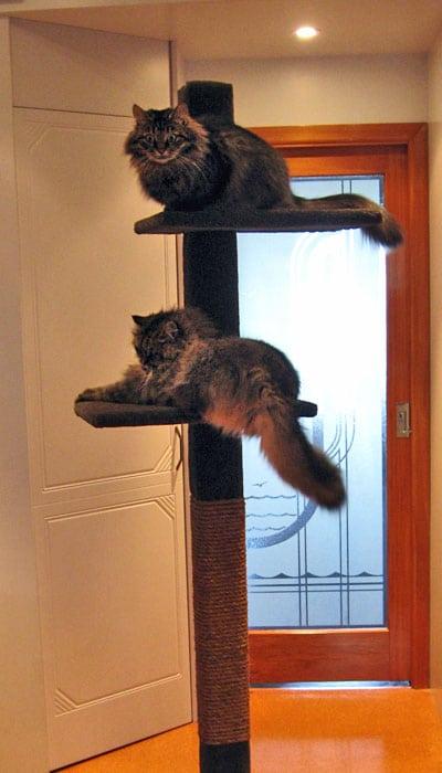 SUPER-2 cat climbing post