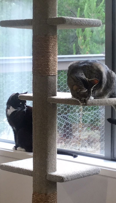 Cats with SUPER-3 cat climbing post